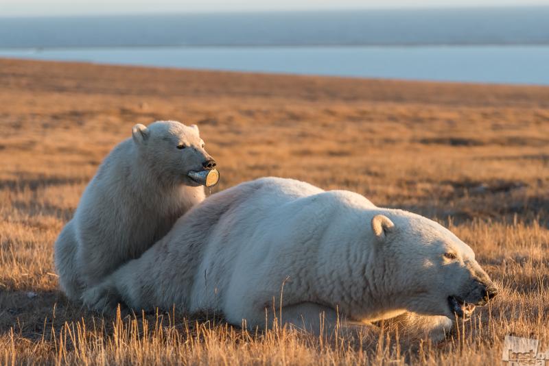 Спасение медвежонка