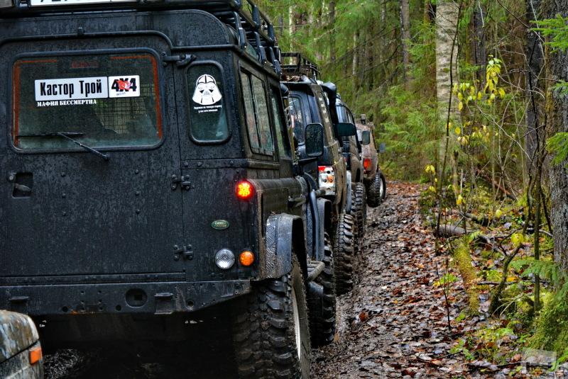 Пробки бывают и  лесу
