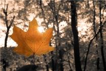Воспоминание о золотой осени