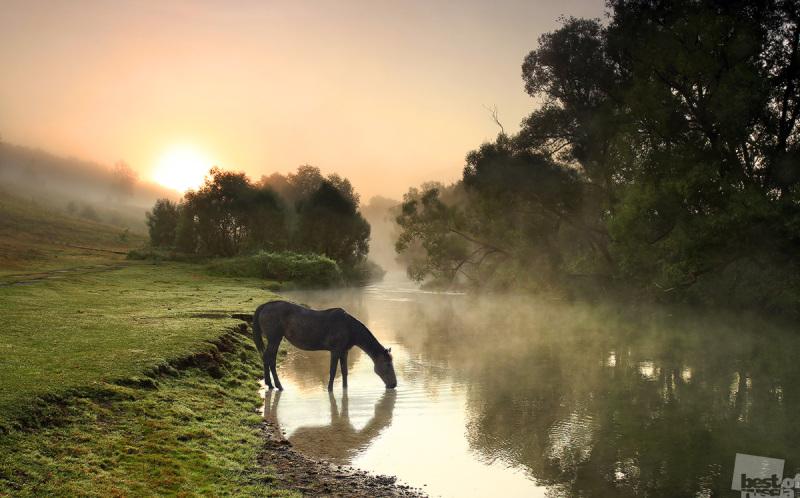 """Ходят кони над рекою, ищут кони водопою..."""
