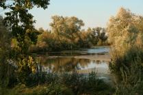 Тихий пруд