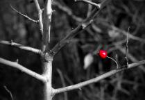 Последняя ягодка
