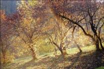 Про осень,солнце и красные ягоды