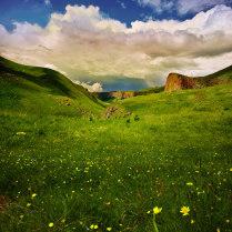 Мир цветов и тишины