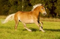 я - маленькая лошадка