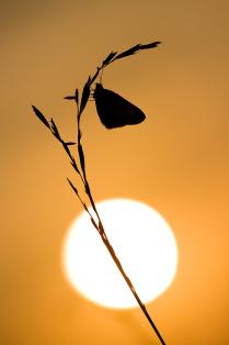 В надежде на Солнце