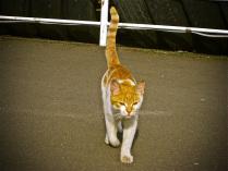 портовый кот