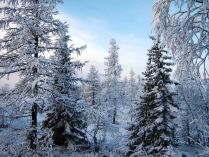 Зимний день на Ямале