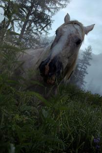 Лошадь в тумане.