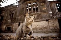Кошкина надежда или Хозяева не придут