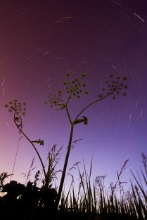 Звездная карусель