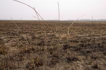 Сгоревшее поле