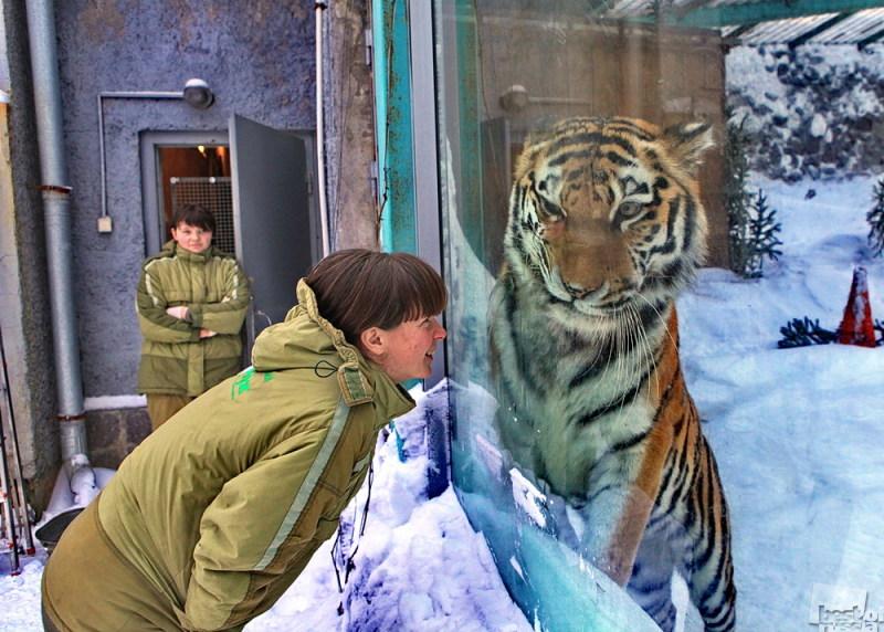 Года Тигра.