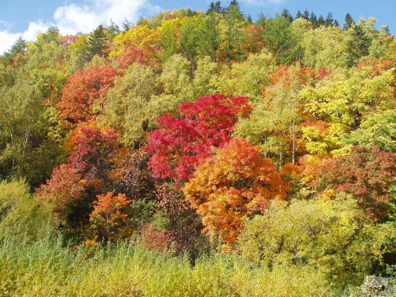 Сахалин, осень