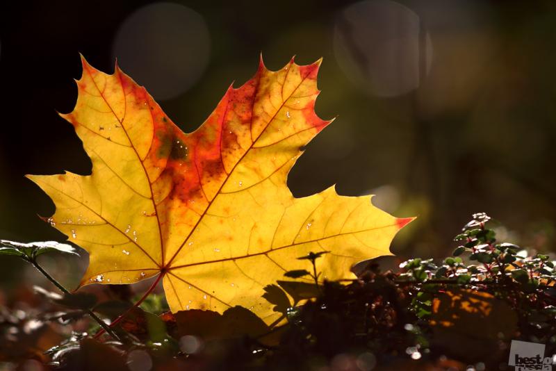 Что такое осень?..