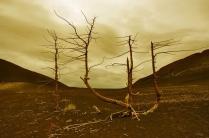 Мертвый лес.