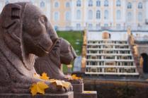 Осенние львы
