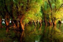 Тихо, как в Раю