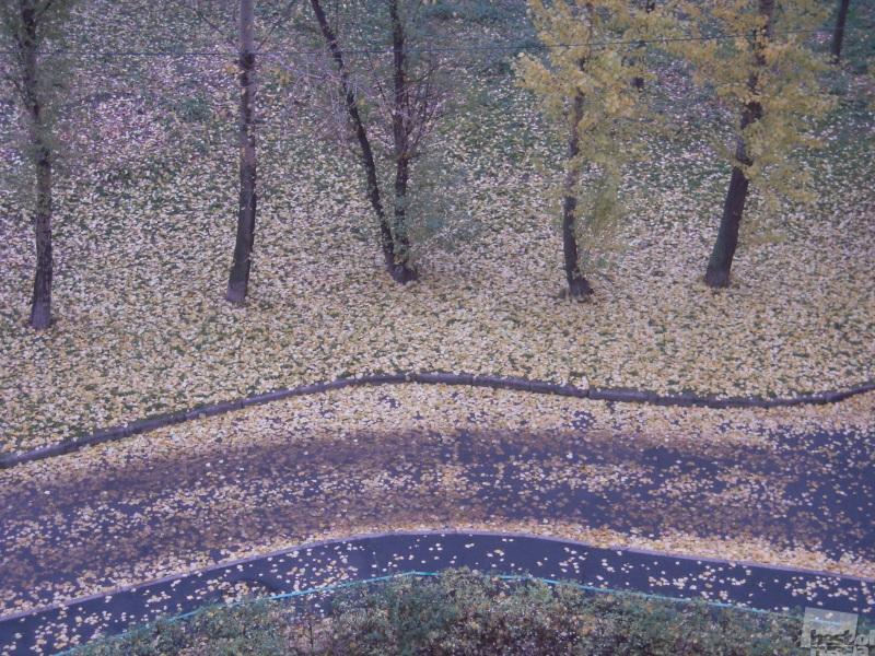 Осень в Кунцево