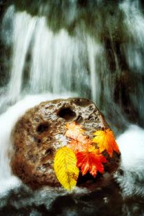 Осенние потоки...