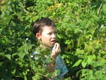 По малину в сад пойдём