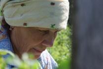 Бабушка собирает малину
