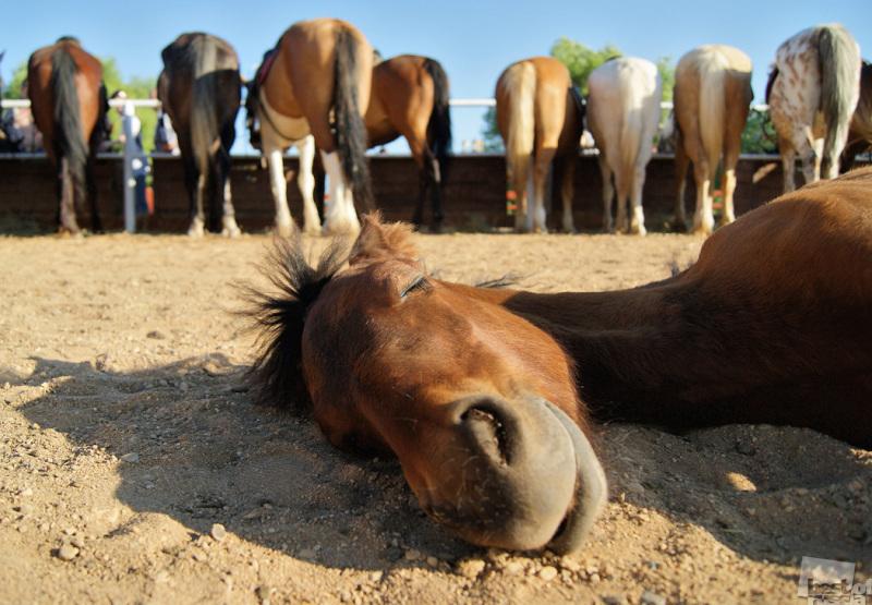 Детеныш лошади