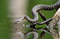 Змей - рыболов