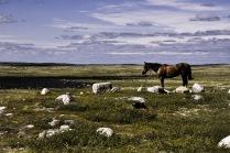 летний пейзаж с конем