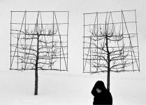 Женщина, проходящая мимо деревьев