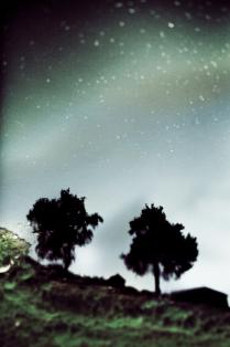 звезды тополиного пуха
