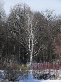 Краски зимы