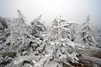 В снежных оковах