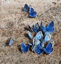 Композиция из бабочек