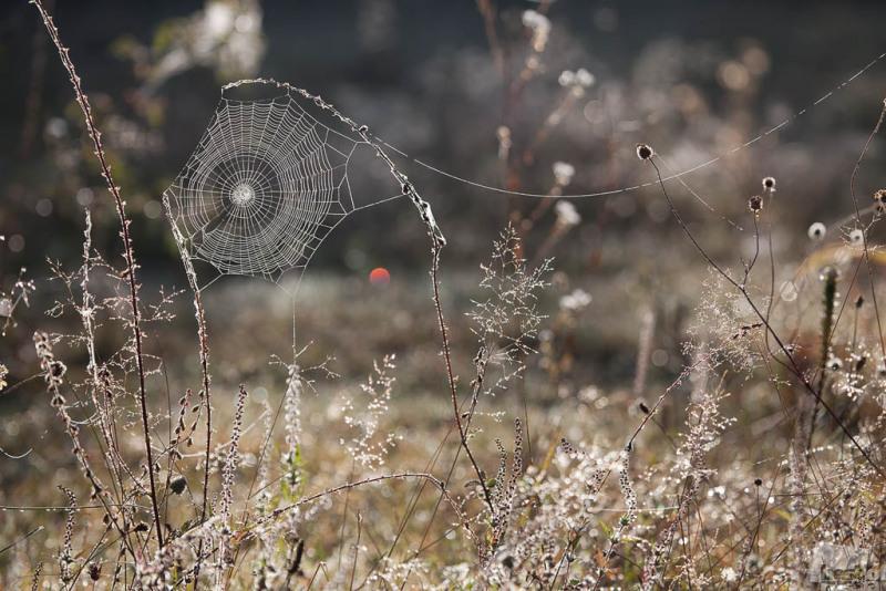 Ловец солнечных зайчиков