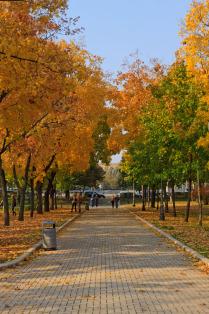 Новодевичья осень