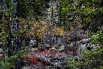 Дивный радиоактивный лес