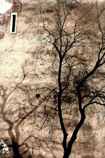 """""""Предпоследнее"""" Питерское дерево и его тень."""