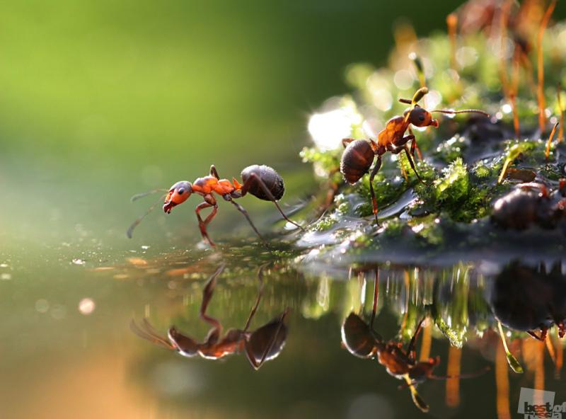 Мир муравьев