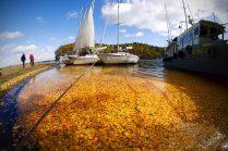 Бархатная осень