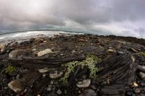 Южжное побережье Северного Ледовитого океана
