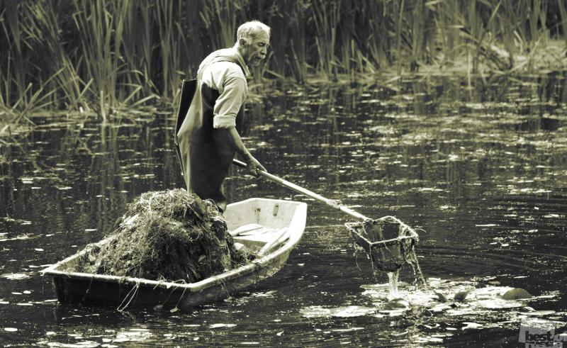 дуремар ловил на болоте