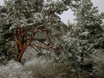Зима,Зима....
