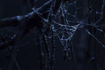 сети тьмы