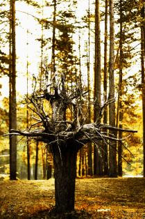 Дерево мудрости