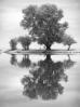 Память о Древе