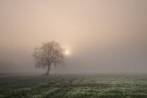Мир сотканный туманом