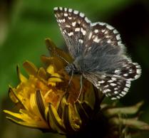 Маленькая весенняя бабочка