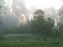 Лесной туман.