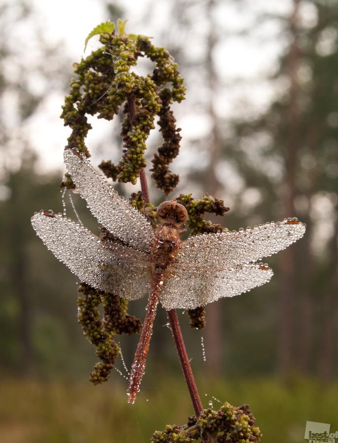 Kristall Libelle